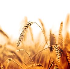 امور زراعی